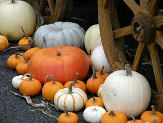 Pumpkin Picking - Image Credit: https://www.flickr.com/photos/fauxto_dkp/2987306709